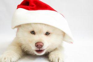 christmas-1874259_960_720